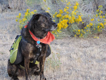 Обслуживайте собаку Стоковые Фотографии RF