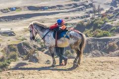 Обслуживание верховой езды на основании горы Bromo Стоковая Фотография RF