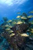обучать largo рыб ключевой тропический Стоковые Фото