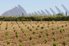 обшивает панелями солнечный виноградник Стоковые Фотографии RF