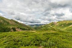 Обширная зеленая сцена тундры нашла в национальном парке ` s Denali Аляски стоковые изображения rf