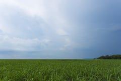 Обширное поле крана сахара стоковые изображения