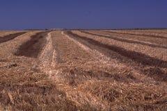 Обширное поле сена - = строки вырезывания Стоковая Фотография RF