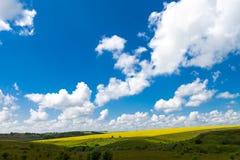 Обширные поля маргариток и цветя мустарда в России Стоковое Фото