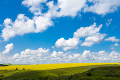Обширные поля маргариток и цветя мустарда в России Стоковое фото RF
