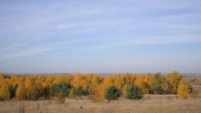 Обширные пространства России Золотистая осень Желт-красный лес на предпосылке голубого неба с малыми облаками цирруса акции видеоматериалы