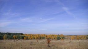 Обширные пространства России Золотистая осень Желт-красный лес на предпосылке голубого неба с малыми облаками цирруса сток-видео