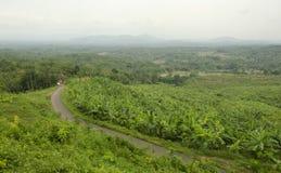 Обширные плантации банана Стоковое Изображение