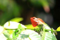 Общая зеленая ящерица леса Стоковые Фото