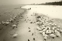 Общее в существовании зимы стоковая фотография