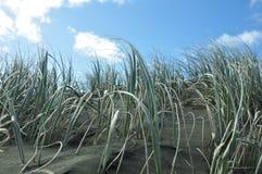 Общее естественное на пляже Piha, Новой Зеландии Стоковые Изображения