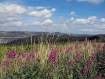Общее Caerphilly, южный уэльс Стоковое Фото