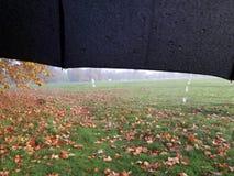 Общее Ealing Стоковая Фотография RF