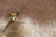 Общественная вода из крана Стоковое Изображение RF