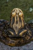 Общественные и внешние украшения: брызг фонтана в форме лягушки Стоковые Изображения
