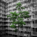 Общественный жилой массив в Гонконге Стоковые Фотографии RF