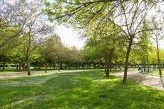 Общественный парк весной с людьми Стоковые Фотографии RF