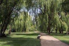 Общественный парк во время лета, зеленой природы, теней деревьев, растительности, деревянной скамьи Стоковые Изображения RF