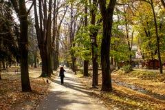 Общественный парк в осени - Vrnjacka Banja, Сербии стоковые фотографии rf