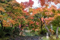 Общественный парк когда осень приходит в Киото, Японию Стоковая Фотография RF