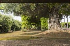Общественный парк, который нужно ослабить Стоковые Изображения RF