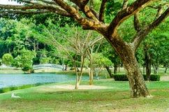 Общественный парк провинции Phangnga Стоковые Изображения RF