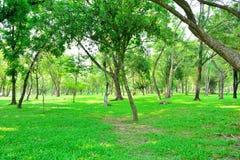 Общественный парк с деревьями лужайки Стоковые Изображения RF