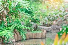 Общественный парк с прудом Концепция ослабляет время с семьей Стоковое Изображение RF