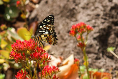 Общие бабочка и цветки Стоковые Фото