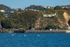 Общие дельфины скачут в залив Эванса перед иконическим знаком города Веллингтона стоковые изображения