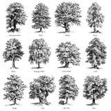 Общие установленные иллюстрации вектора деревьев иллюстрация вектора
