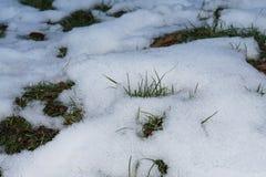 Общий вид травы покрытой с снегом в январе в fo стоковое изображение
