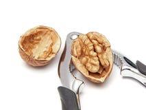Общий грецкий орех (regia juglans) Стоковая Фотография