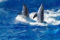 Общий дельфин скача вне океана Стоковая Фотография