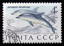 общий дельфин Стоковые Фото