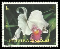 Объединенные эмираты, цветки Стоковые Фото