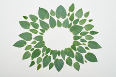 Объезжайте для космоса экземпляра сформированного зелеными листьями Стоковая Фотография RF