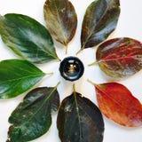 Объектив фотоаппарата окруженный красочными листьями осени на белом backgr стоковые изображения