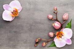 Объекты темы орхидеи курорта на серой предпосылке стоковые фото