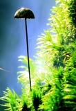 Объект грибка коралла космический странный Стоковое Изображение RF