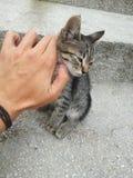 Объятие кота Стоковые Фото