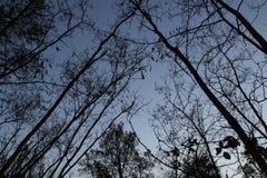 Объятие ночи деревьев Стоковые Изображения RF