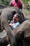Объятие слона Стоковое Фото