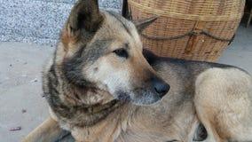 Обычная собака Стоковое фото RF