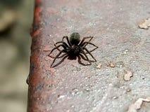 Обычный маленький паук стоковые фотографии rf