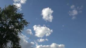 Облака быстро плавают над зеленым деревом акции видеоматериалы