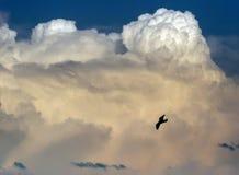 Облака в цвете backgroung голубого неба Стоковое Фото