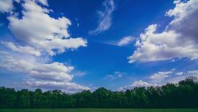 Облака летают над лесом в после полудня сток-видео