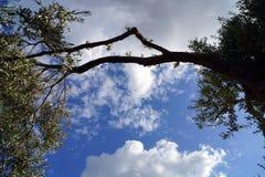 Облака за оливковым деревом Стоковая Фотография RF