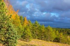 Облака и пушистые ели Стоковая Фотография